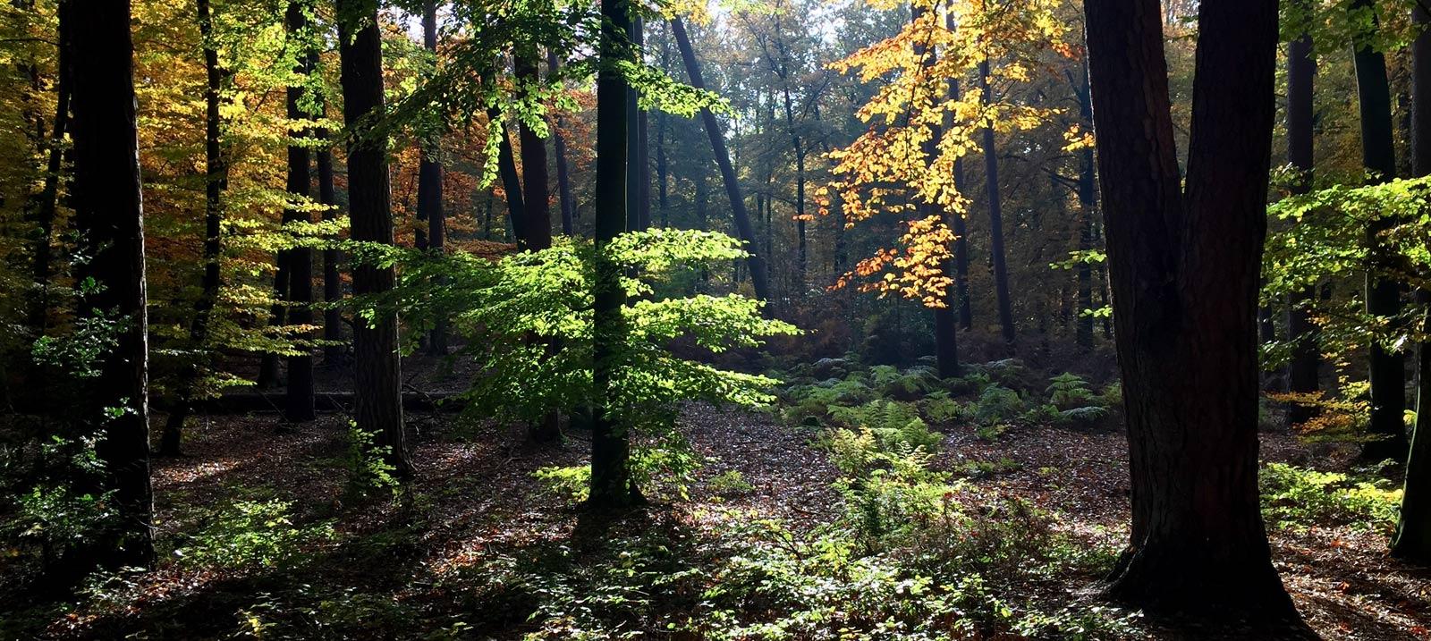 Unser Wald (2 Minuten von hier)